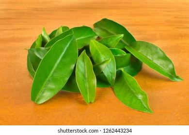 Unusual edible plant Pereskia aculeata, called in Brazil as ora-pro-nóbis in wood background