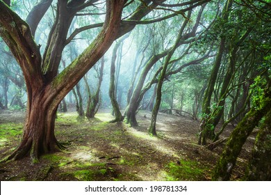 unusual forest