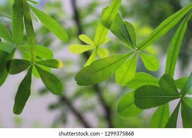 Unusual green tropical leaves backlit from sunlight