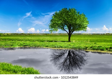 An unusual landscape. A green flowering tree is reflected in the water lifeless, without leaves and black and white.