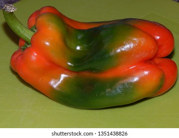 An unusual Pepper  fruit in three colors of red, yellow, and green. photographed on a green background. Closeup.