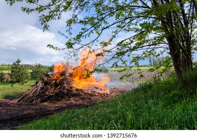 unusual perspective with a juxtaposition of a large bonfire and a blooming tree on a beautiful spring day