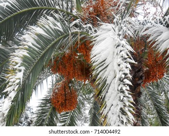 An unusual photo frame. in Sochi the snow. Palm trees in the snow.