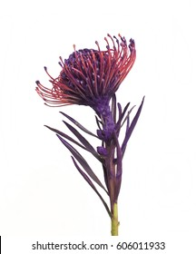 Unusual purple flower, Purple flower