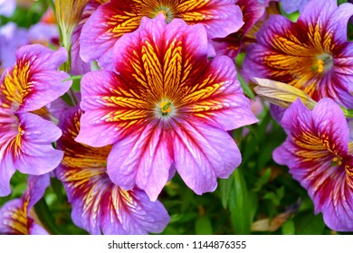 Unusual purple flower. Exotic floral plant in violet, tropical foliage, gentle nature background.
