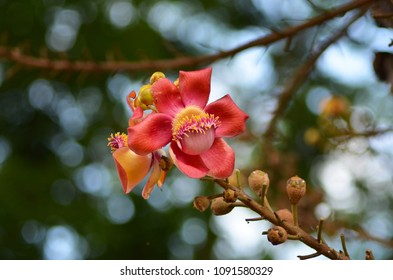 An unusual red tropical flower on the end of a branch. The flower has a pink and yellow centre, and is surrounded by brown buds. The background is out of focus.