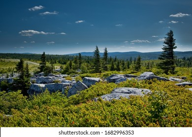 The unusual rock formations at Bear Rock in Dolly Sods Wilderness in West Virginia during summer