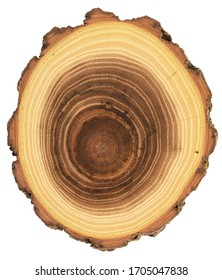 Unusual shape wood slab texture. Acacia tree cross section with growth rings and bark isolated on white background overhead view