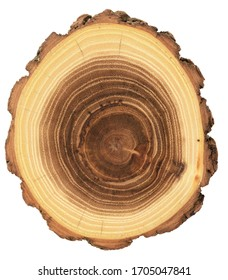 Unusual shape wood slab. Young acacia tree cross section showing growth rings and bark isolated on white background overhead view