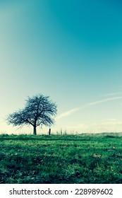unusual tree in the meadow autumn season - Shutterstock ID 228989602