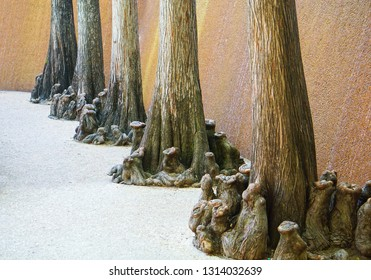 Unusual tree roots lining the pool at the Water Gardens in Fort Worth, Texas