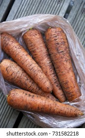 Unwashed carrots on a bag. Grey wooden background. Daylight