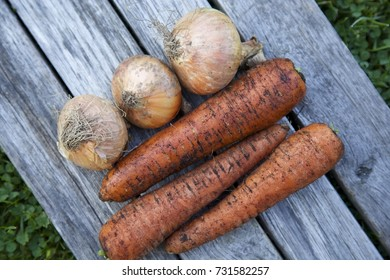Unwashed carrots and onions on a grey wooden background. Green grass background. Daylight. Horizontal