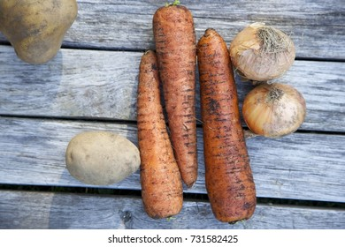 Unwashed carrots, potatoes and onions. Grey wooden background. Daylight