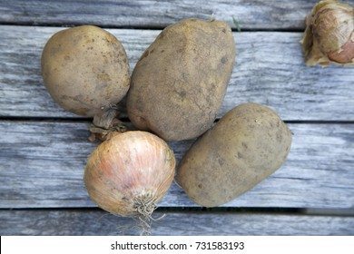 Unwashed potatoes and onion. Grey wooden background. Daylight