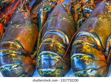 An up-close view of three fresh lobsters