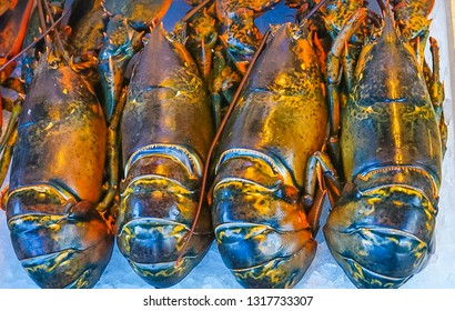 An up-close view of three fresh lobsters in a seafood market