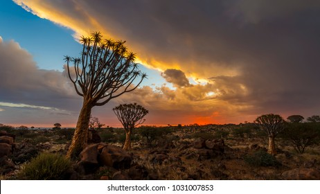 Upcoming Thunderstorm at sunset at Quivertree Forest, Keetmanshoop, Namibia, Southern Africa.