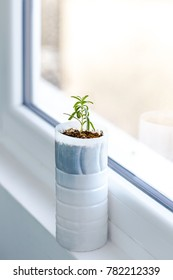 Upcycled plastic milk container into plant pot for a rosemary plant