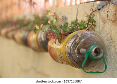 Upcycle/recycled water bottle with flower plant