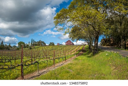 An uphill view of spring in the Sonoma Wine country. A vineyard is on the left with buildings at the top of the hill. Green grass flowers and trees in the center. A road in right. Clouds and blue sky.