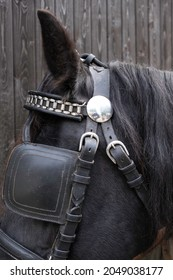 Upper part of a horse's head of a black Friesian horse with harness, halter, chains, browband, reins and leather blinker. The blinker restrictes the field of vision. Focus on the blinker