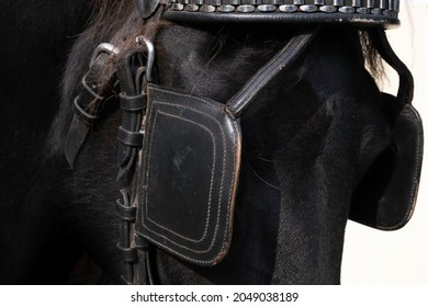 Upper part of a horse's head of a black Friesian horse with leather browband and blinkers. The blinker restrictes the field of vision. Focus on the stitching of the front blinker