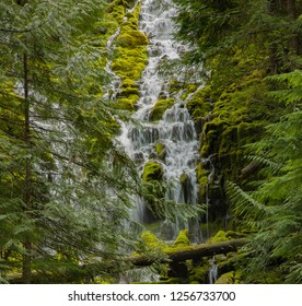Upper Proxie falls on the McKenzie River in the Willamette National forest east of Eugene, Oregon