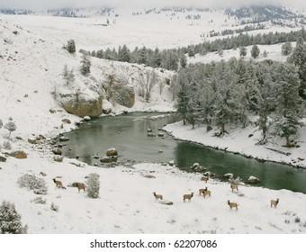 Upper Yellowstone River in winter