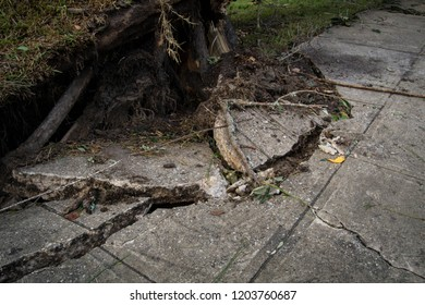 Uprooted from hurricane Michael