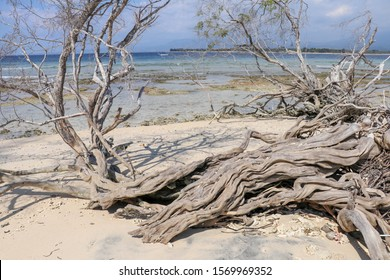 Uprooted mangrove trees on a white beach on Gili Meno. Abstract shapes of dry trees without bark. Twisted wood, branches and roots create bizarre shapes. Background the sea and corals during low tide.