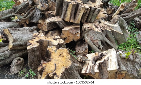 Uprooted pieces of wood with a diameter larger. This type of wood is open wood or wood that is rare in protect