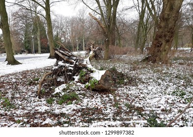 Uprooted stump covered with snow.