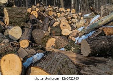 Uprooted stumps of large trees