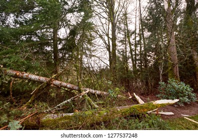 Uprooted tree and downed branches after winter storm in suburban garden