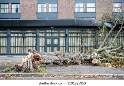 An uprooted tree fallen on a house in the aftermath of a storm with strong winds.