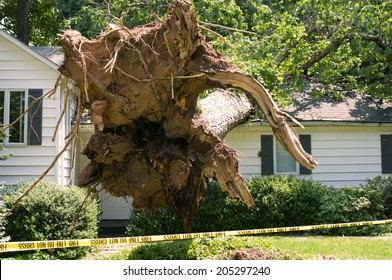 Uprooted tree fell on a house after a serious storm came through