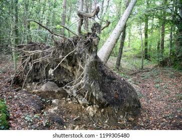 Uprooted tree in the middle of the forest