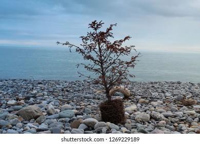 Uprooted tree on beach