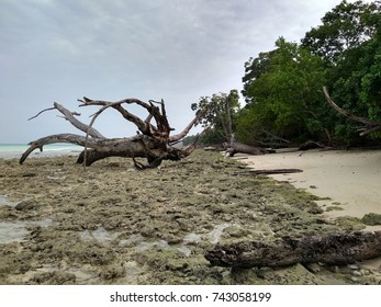 Uprooted Trees by the Beach