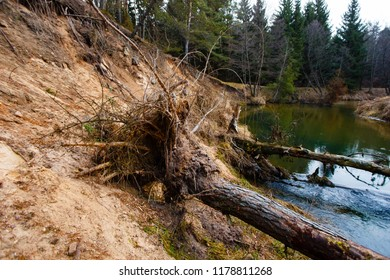 Uprooted trees lying in water. Soil erosion