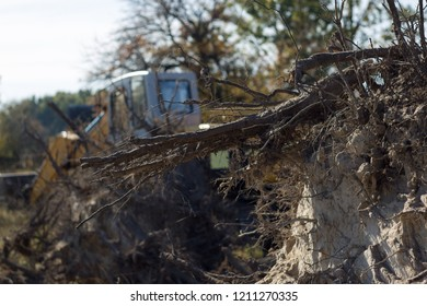 uprooting of old trees with the root of the excavator