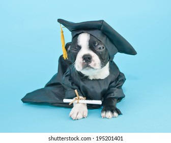 Royalty Free Dog Graduation Images Stock Photos Vectors