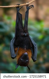 upside down bat resting on the branch