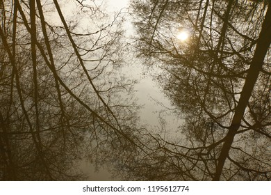 upside down reflection on a brownish river surface of bleak, leafless trees in winter time with a pale sun behind the branches