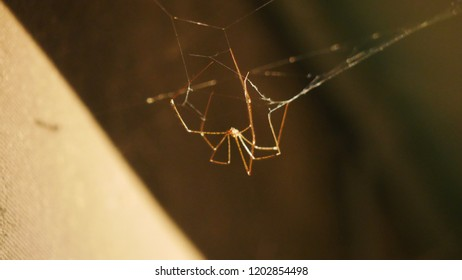 Upside down spider