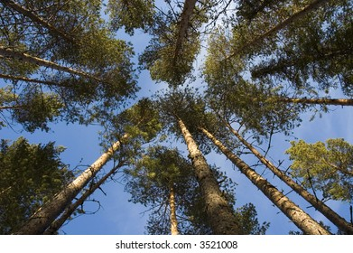 upward angle in a forest