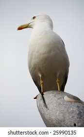 Upward perspective view of a gull on top of a stone statue.