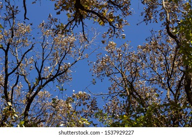 Upward view of autumn season trees and branches with blue sky background