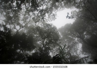 Upward view, dark tree branches against the cloudy sky, in a Colombian foggy forest, in the Chicaque natural park